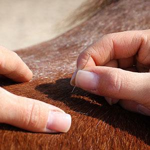Tierakupunktur